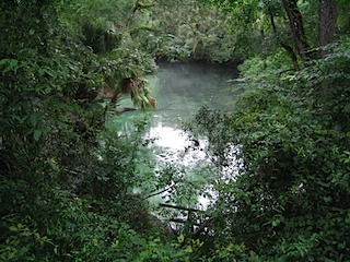 IMG_4246BlueSprings1